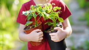 Young child holding 2 young plants ready for the garden