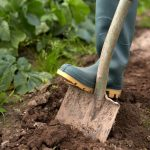 How to Prepare a Garden Bed - 5 Ways to Start New Vegetable Plots