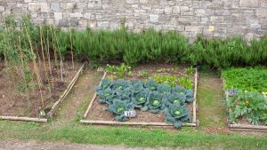 Well planned and defined garden areas with cabbage, zuchinni, parsley and lettuce