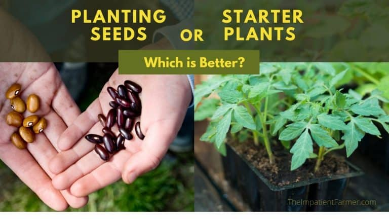 Side by Side Images of Seeds and Starter Plants for the Vegetable Garden