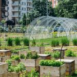Urban Farming Trends: The Growth of Small Scale Farms in Our Cities