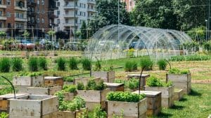 Large urban community garden with hoop houses and raised planters
