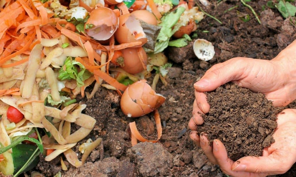 vegetable scraps decomposing in comport pile with hands holding fully composted soil