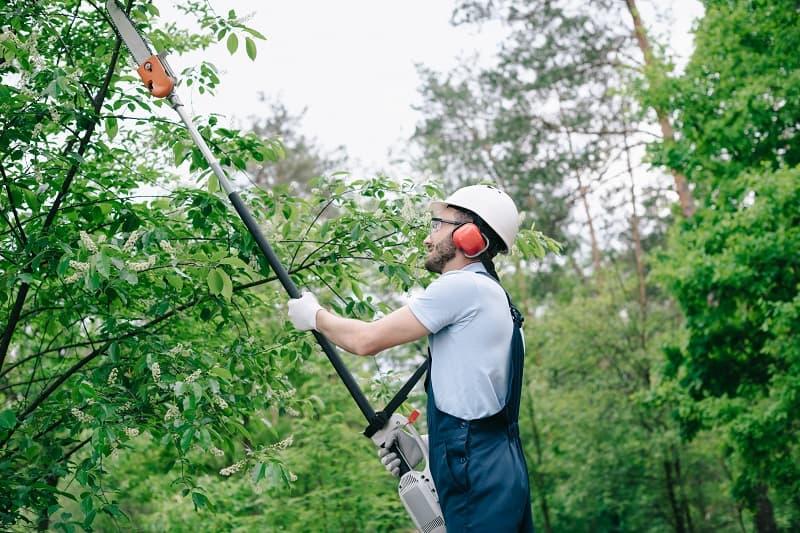 Man trimming a high tree branch