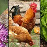 15 Ideas for Your Small Hobby or Backyard Farm