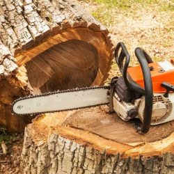 How to Use a Chainsaw Safely To Prevent Accidents