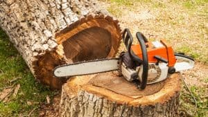 Chainsaw on stump after cutting down tree