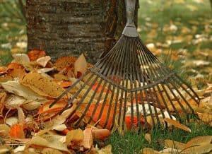raking fall leaves to make mulch