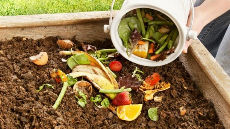 Woman added kitchen refuse and vegetable scraps to a compost pile
