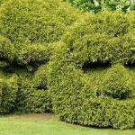 How to Use a Hedge Trimmer - Safety, Instructions, and Design Tips