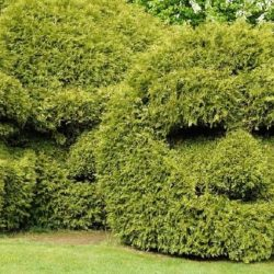 How to Use a Hedge Trimmer – Safety, Instructions, and Design Tips