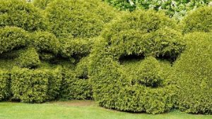 Giant hedges trimmed into faces