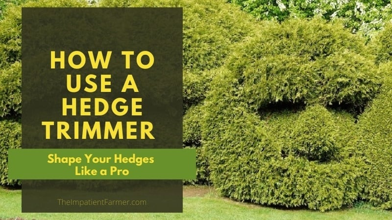 Hedges trimmed into a mans face with Title overlay - Shape Your Hedges Like a Pro