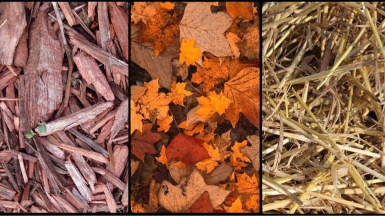 Collage of three types of mulch - bark, leaves and straw