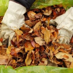 The Best Reusable Yard Waste Bags for 2021