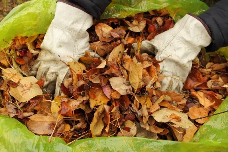 bagging leaves into yellow-green lawn bag