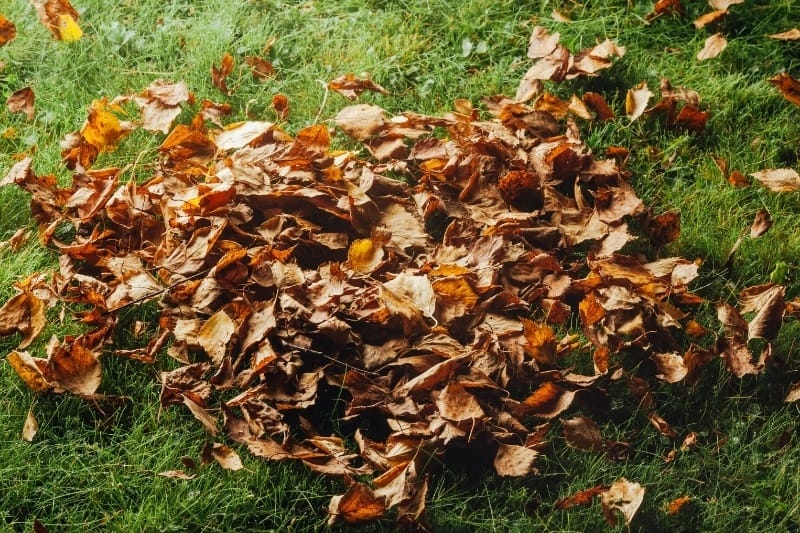 pile of leaves on green grass